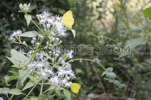 Yellow Butterfly Perched on a Cute White Flower, With Blank Space on Sides for Text
