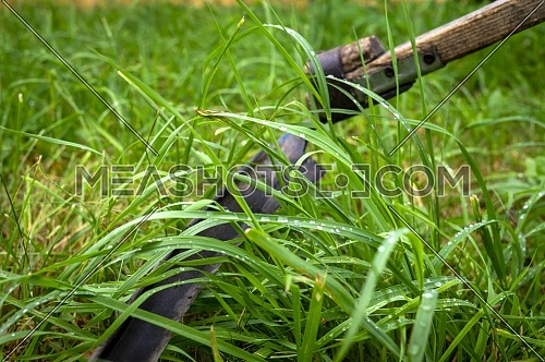 Rustic scythe lying in long wet green grass in a field in a close up on the blade
