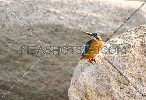 a King fisher on a white rock