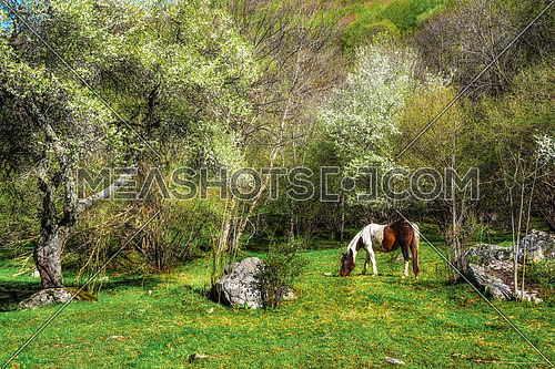 Nature landscape with wild horses. Wild horses in nature landscape. Mountain horses in nature ambient on a sunny day.