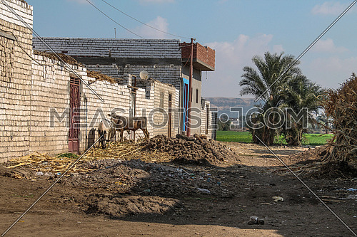 A village in Egypt showing a traditional house, agricultural land, palm trees and a mountain at the background