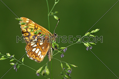 Small butterfly on a strand of grass with room for text