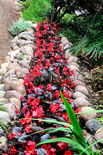red plants and flowers in rock shaped