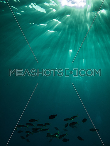 Rays on light Sparkeling underwater