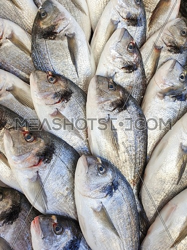 Many bream fish on ice for sale, Fish local market stall with fresh seafood,view from top.