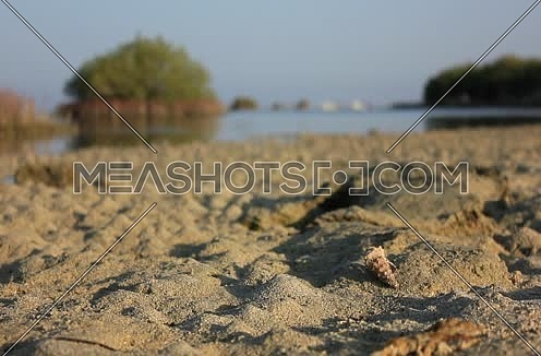 Close Shot for a Shellfish (Clibanarius) moving in the sand at wadi Lahmi at Day - 5D`