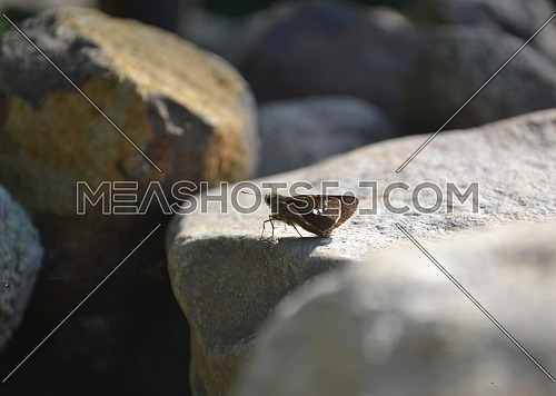 Little black butterfly perched on rocks during the day with nature background