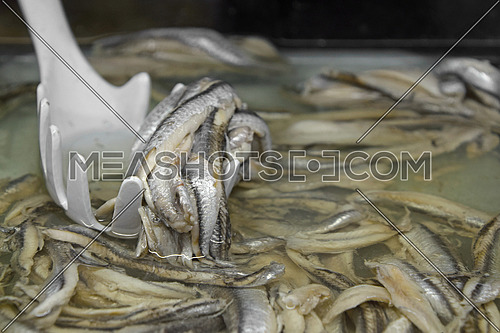 Marinated pickled Spanish anchovy fish fillets in brine with scoop in retail market store, close up, high angle view