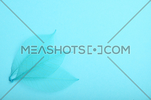 Three blue dried skeleton leaves decoration overlap in corner on design paper background