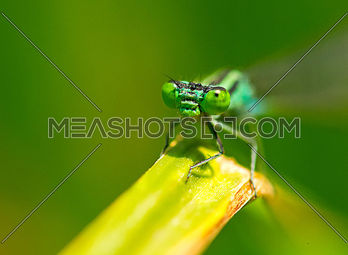 Damselfly on a green branch