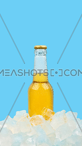 Close up one clear glass bottle of cold lager beer on ice cubes at retail display isolated on blue background, low angle side view