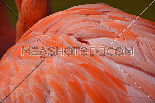 Close up side rear view of pink orange flamingofeather over green background of water, high angle view