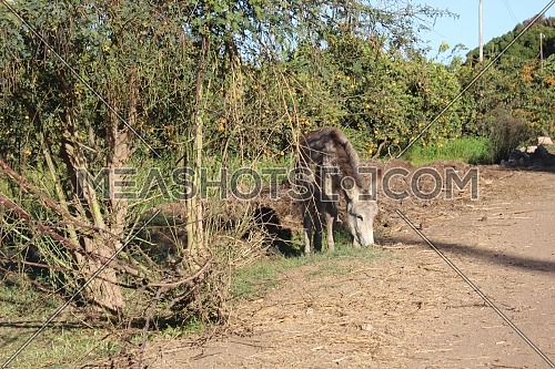 Donkey grazing on grass in front of green field