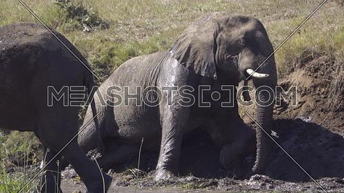 Scene of an elephant laying down on a muddy bank