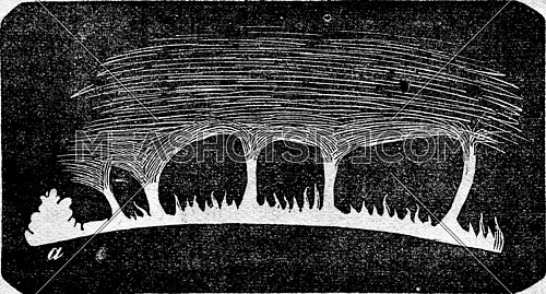 Solar flares on the surface of the sun. From Magasin Pittoresque, vintage engraving, 1876.