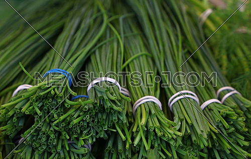Bunches of fresh spring green shallots scallion onions on retail farmers market display, close up, low angle view