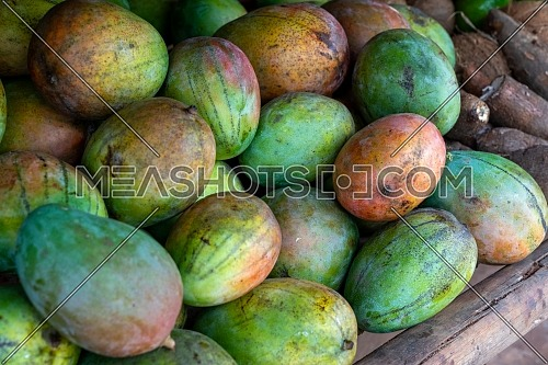 Red and green mango stack at grocery on tropical marketplace outdoor,Samana peninsula,Dominican republic.