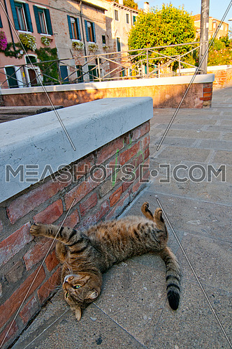 Venice Italy wild cat relaxing on the street