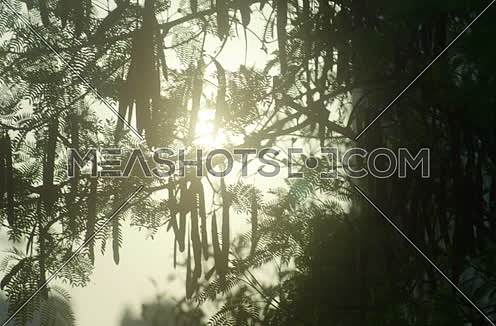 Long Shot for Sun shines through a tree branches
