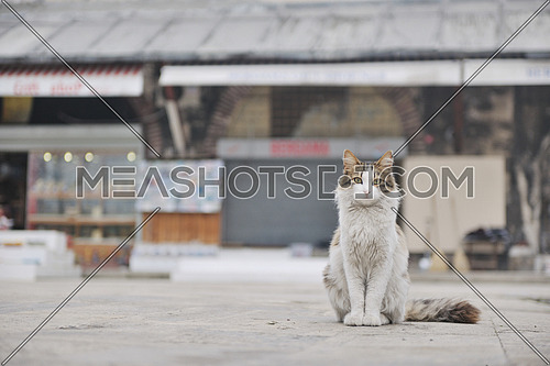 A cat looking to the camera in an urban street