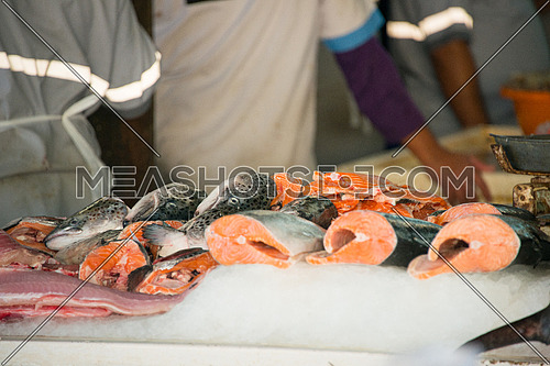 fish display in fish market dubai