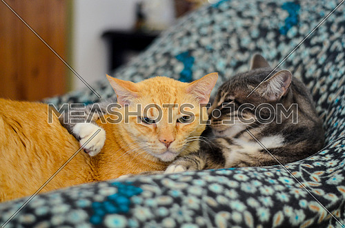 Cats sitting a blanket relaxing