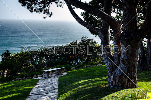 A bench under a tree in front of the ocean