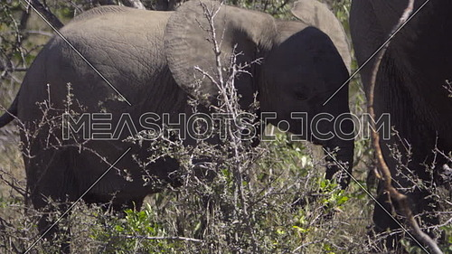 Scene of a baby elephant standing near its mother