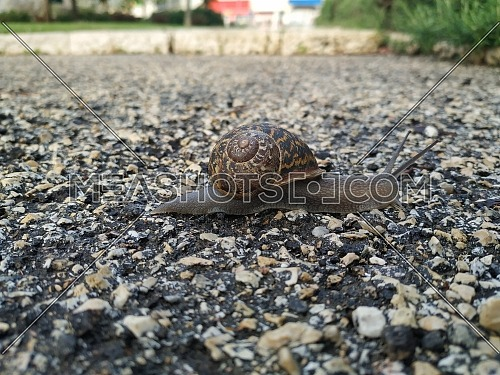 Close up shot for Snail on the path walking at day.