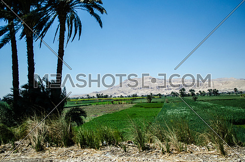 A landscape of agriculture land and huge rock mountain appears in the background on an urban road in Luxor city