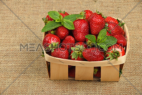Wicker wooden basket full of mellow red summer strawberries and fresh mint leaves on jute burlap canvas background, high angle view