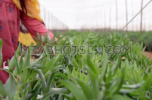 female farmer hands on crops agricultural concept