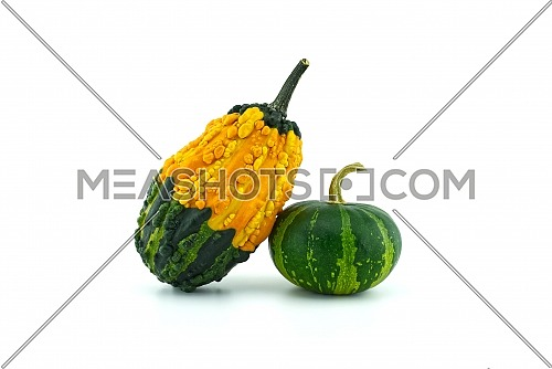 Colorful pumpkins and squashes isolated on white background