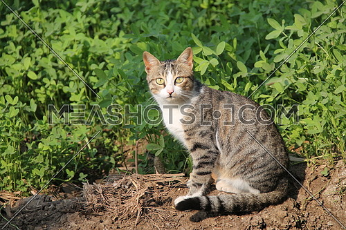 a photo for a cat in rural area in Egypt