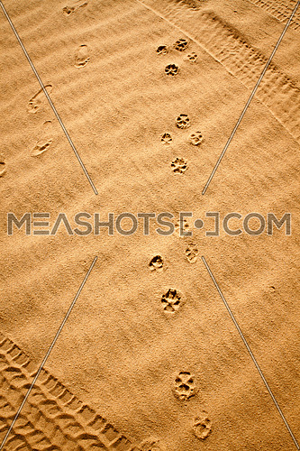 tyre tracks, foot prints, and pawn prints in the desert sand