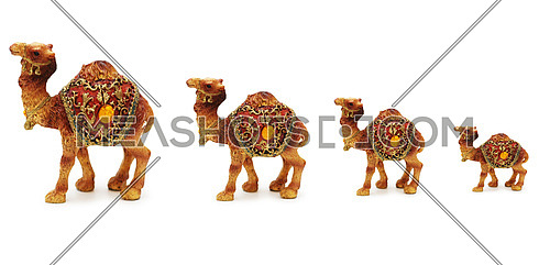 Caravan of camels isolated on white background