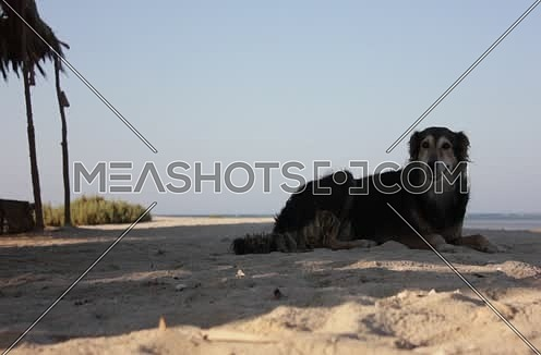 Long Shot for a dog setting down on the shore at Wadi Lahmi at day - 5D