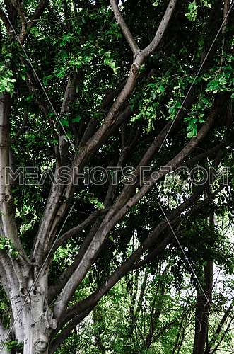 a close up photo of a big tree