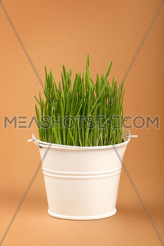 Spring fresh green grass growing in small white painted metal bucket, close up over brown paper parchment background, low angle side view