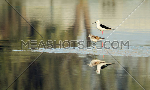 2 Birds on the water