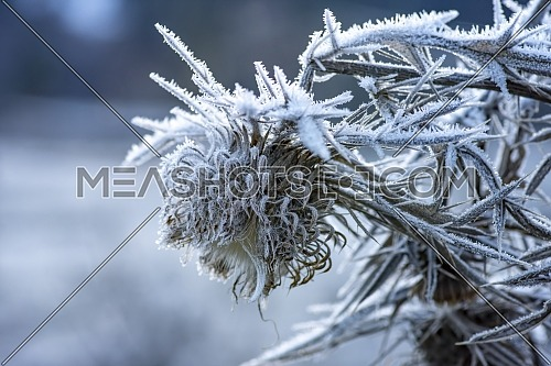 Close up shot of frozen flowers in winter