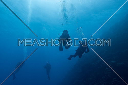 Underwater shot of divers