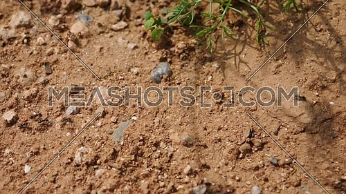 Ants heading to an anthill, macro plane vista Zenith, slight panoramic movement
