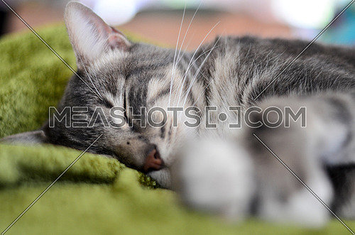 close up view on a cat napping