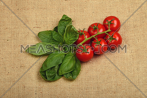Bunch of six red ripe cherry tomato and fresh basil leaves at jute canvas burlap background