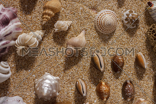 Assorted collection of clams and cone Sea sells on sand