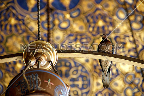Bird standing on a mosque lantern