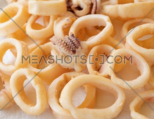 fried squids or octopus (calamari) isolated on white background