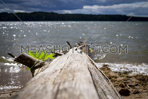 View down the length of a tree trunk lying at the edge of the sparkling sunlit sea on a beach with selective focus