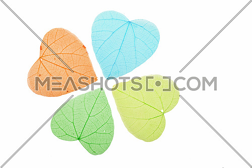 Group of four heart shaped dried skeleton leaves, green, blue and yellow, decoration isolated on white background